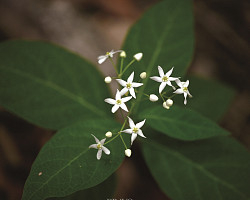 색색의 꽃으로 애간장을 녹이는 민백미꽃!