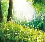 자연으로 돌아가 잠드는 수목장