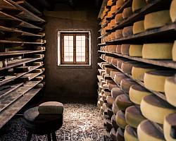 '치즈 공방'으로 은퇴 후 인생 숙성 어때요?