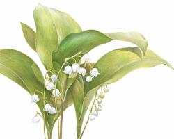 [쉽게 배우는 컬러링] 향기로 방울소리 내는 은방울꽃