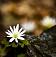 그대 가까이에 피어나는 봄꽃