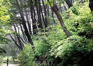 충남 서산시 개심사 숲길, 숲은 일쑤 정결한 지성소였다