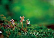 바위구절초·산용담 만개하고 들쭉 열매 익어가는, 가을 백두산