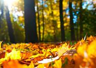 낭만적인 가을의 노래 '고엽'