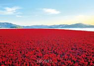 가을 갯벌의 붉은 카펫, 해홍나물