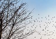 철새 날다, 주남저수지