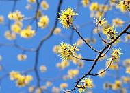 풍년을 기원하는 꽃