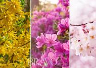'봄꽃'은 언제 필까? 꽃길 명소는 어디?