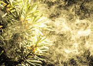 미세먼지, 꽃가루가 괴롭히는 계절, 봄철 눈 건강 이렇게 지켜요
