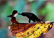 심청의 이야기를 낙엽 형상에 담았다