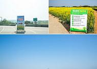 인천공항 유채꽃밭에서 인생사진 찍기