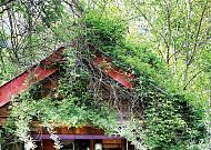 속살 감춘 자작나무 그늘 아래서 위로받다
