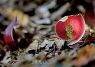 명상의 가을로 이끄는 꽃 애기앉은부채!