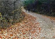 가을의 끄트머리, 울진 금강 소나무 숲에 들다