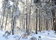 겨울왕국, 한라산 눈꽃산행