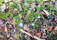 포근한 겨울, 식물의 생태학적 문제