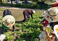 서울시, 생애주기별 치유농업프로그램 참여자 모집