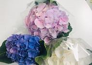 수국 꽃선물, 서울시 민관이 함께 지원해요