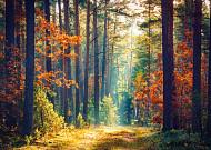 숲에서 시작하는 두번째 청춘 '시니어산촌학교'에서 만나요