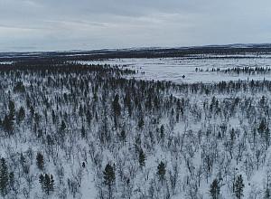 '세계테마기행' 숲과 호수(수오미)의 나라 핀란드, 자작나무 숲ㆍ리시툰트리 국립공원 트레킹을 떠나자