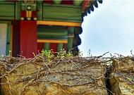 땅끝마을 해남의 미황사, 그리고 달마고도(達磨古道)를 걷다
