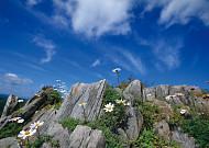 암벽 타기 즐기는 고산식물, 바위구절초!