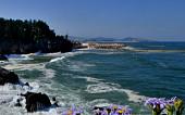 [김인철의 야생화] 보랏빛 꽃다발로 거친 파도를 다독이는, 해국