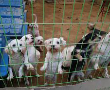 [반려동물 이야기] 유기견 보호소 '행복한 강아지들이 사는 집'에 가다