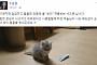 '탄핵 투사'에서 '고양이 집사'가 된 조응천 의원