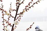 [내일 날씨] 미세먼지 '보통'… 밤부터 충청‧남부 '비'