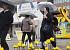 [내일날씨] 흐리고 가끔 비, 폭염 누그러져 … 낮 최고 21∼28도 '평년 수준'