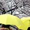 """[일기예보] 오늘 날씨, 전국 대체로 흐리고 남부지방·제주도에 비…'서울 낮 20도' """"미세먼지 주의!"""""""
