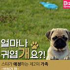 [카드뉴스] 스타가 애정하는 제2의 가족 (반려견 편)