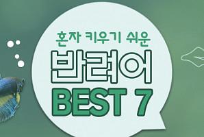 [혼자가메리트]혼자 키우기 쉬운 반려어 BEST 7
