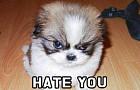 우리가 몰랐던 강아지가 싫어하는 사람들의 6가지 행동