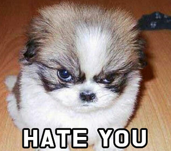 우리가 몰랐던 강아지가 싫어하는 사람들의 6...