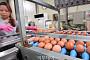 '살충제 계란' 커지는 불안…