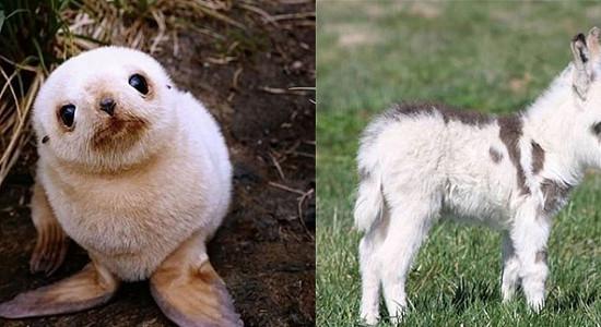 랜선집사 심장 멎게하는 씹덕터지는 아기 동물들