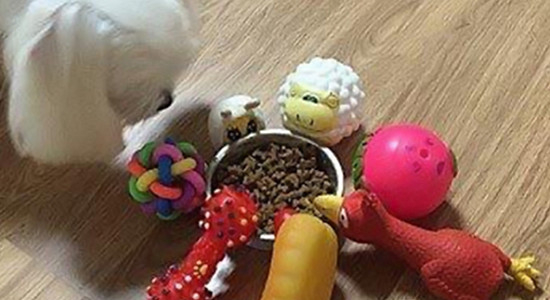 밥 안 먹고 쫄쫄 굶는 강아지를 위한 사료 급여팁 7