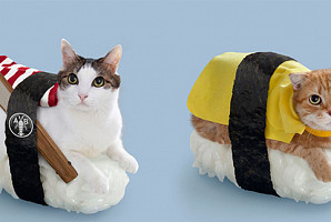 황당하지만 귀여운 고양이와 초밥의 신박한 콜라보