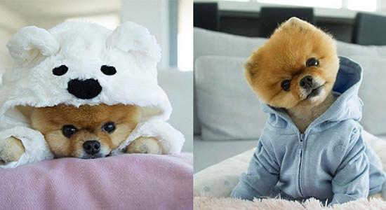 인스타그램 반려동물 인기 1위, 셀럽 댕댕이 '지프'
