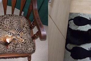 다 찾으면 고양이 덕후 인정!  숨은 '냥이' 찾기