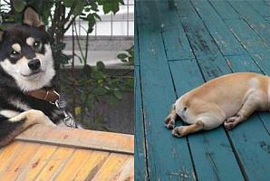 사람보다 더 사람 같은 인생 2회차 동물들 모습