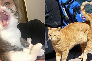 멍충미 폭발하는 고양이들의 절묘한 순간 포착 모음