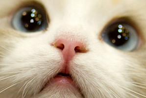집사들도 잘 모르는 고양이 '코'에 관한 신기한 사실 7