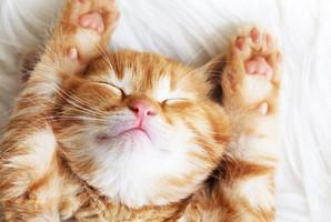 우리 집 고양이가 기분 좋을 때 하는 행동 7가지