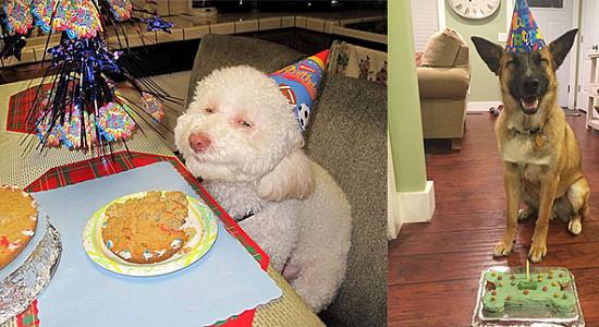 생일을 맞은 동물들의 세젤귀 생일파티 사진 모음