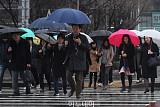[포토] 봄비 내리는 출근길