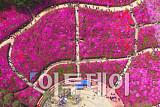 [포토] 붉게 물든 철쭉동산