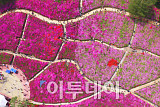 [포토] '군포철쭉축제 2018' 개막 하루전